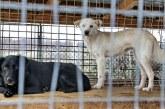 Baia Mare – Proiect: Targuri trimestriale pentru adoptia de caini