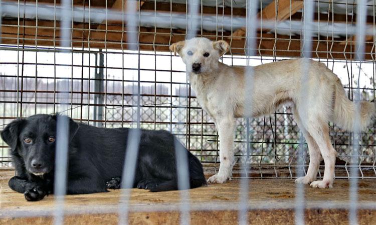 Baia Mare - Proiect: Targuri trimestriale pentru adoptia de caini