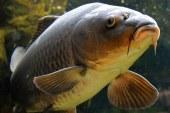 Germania – Autoritatile pompeaza apa imbogatita cu oxigen intr-un lac pentru a salva pestii afectati de canicula