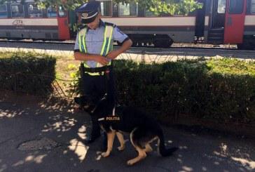 Maramureseni depistati de politisti in timp ce incercau sa transporte cu trenul tigari de contrabanda