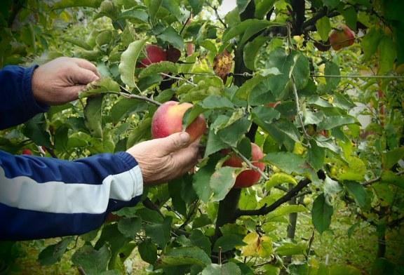 Cele zece miracole ale sucului de mere pentru sanatatea ta
