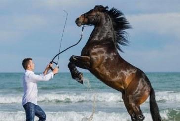"""Un maramuresean este supranumit """"imblanzitorul de cai""""in Spania"""
