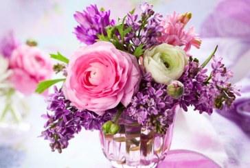 Care sunt cele mai cautate flori in Maramures! Interesul locuitorilor din judet a crescut considerabil in ultima perioada