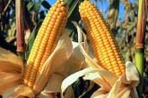 Romania a exportat, anul trecut, 12 milioane de tone de cereale in UE si tari terte; incasarile au depasit 2,2 miliarde de euro
