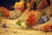 Cum va fi vremea in Maramures in perioada 24 octombrie – 6 noiembrie