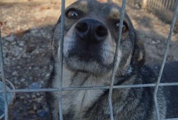 FURT INEDIT – Au furat 10 căței metiș din adăpostul de câini Baia Mare