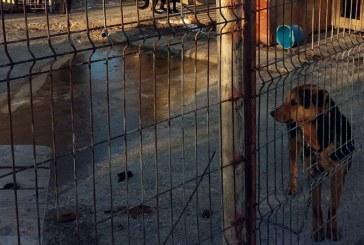 GER: Consiliile locale au obligatia sa aiba grija de animalele din adaposturi
