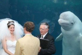 O balena alba curioasa a eclipsat o mireasa in ziua nuntii aparand in fotografiile din timpul ceremoniei religioase