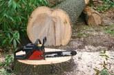 Maramureșean condamnat pentru tăiere de arbori fără drept