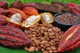 Cultivatorii de cacao mizează pe apetitul Indiei pentru dulciuri