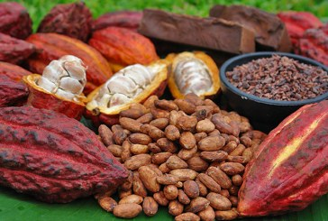 Războiul ciocolatei i-a lăsat pe fermierii din Coasta de Fildeş cu boabele de cacao nevândute