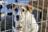 Baia Mare: Continua ridicarea cainilor fara stapan de pe domeniul public