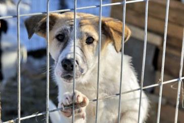 Fii voluntar! Ajuta cainii fara stapan! Vagabonzii Veseli, gata de curatenia de primavara (VIDEO)
