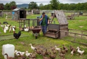 Vesti bune pentru fermieri: APIA plateste subventii