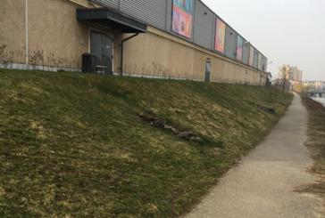 Reactia Kaufland: Curatenia de primavara nu a intarziat mult (FOTO)