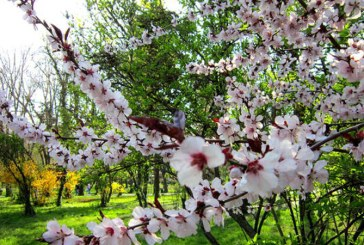 Maramures: Vezi prognoza meteo pentru perioada 27 martie – 9 aprilie