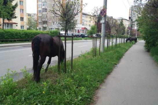 Actiune in forta: 120 de cai din Baia Mare vor fi scosi din oras