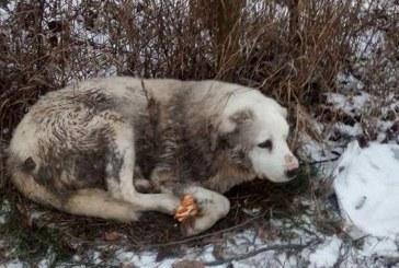 Proiect: Cruzimea fata de animale pedepsita cu pana la 10 ani de inchisoare
