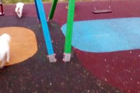 De la cititori: Caini pe locurile de joaca amenajate pentru copii (FOTO)