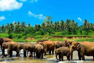 """Elefantii folositi in sectorul turistic din Asia traiesc adesea in conditii """"inacceptabile"""", avertizeaza un studiu"""
