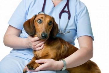 """Asociatia """"Salvati Animalele"""" din Baia Mare a inceput o campanie gratuita de sterilizare a cainilor si pisicilor"""