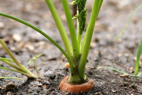 Ministru: Fermierii care au inregistrat pierderi din cauza inghetului vor beneficia de o reducere a impozitului pe norma de venit