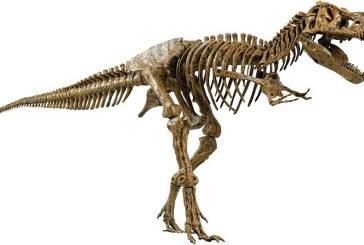 Tyrannosaurus rex era un zdrobitor de oase, forta muscaturii sale echivaland cu greutatea a trei masini