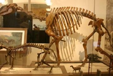 """Studiu: Un animal sud-american, supranumit de Darwin """"cel mai ciudat din lume"""", clasificat de cercetatori"""