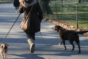 Baia Mare: Noi reglementari pentru caini si stapanii acestora. Este interzis accesul patrupezilor pe o raza de 50 m de zonele amenajate pentru copii
