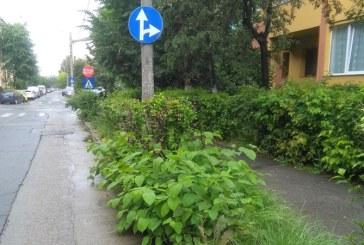 """De la cititori: Primaria a """"plantat"""" noile indicatoare de circulatie"""