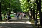 """Studiu: Copacii din orasele """"sufocate"""" de poluare, mai eficienti pentru sanatate decat spatiile verzi"""
