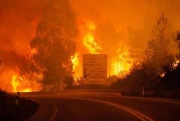 (Galerie Foto)Incendiu de padure urias in Portugalia: Bilantul a urcat la cel putin 24 de morti si circa 20 de raniti, deocamdata. 16 oameni au ars in masinile lor