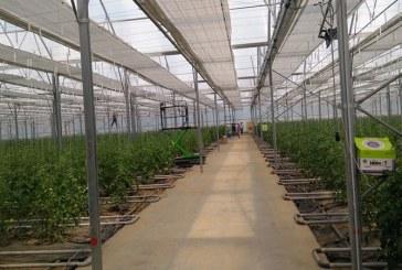Petre Daea: Soiurile romanesti castiga teren, sunt tomate mai gustoase si preferate de consumatori