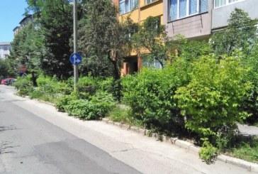 Lucrarile de intretinere a spatiilor verzi au costat Primaria Baia Mare peste 2.3 milioane lei in 2017