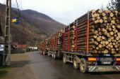 IGPR: Peste 500 de dosare penale si 900 de amenzi pentru nereguli silvice in luna iunie