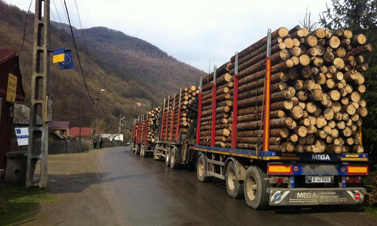 Analiza Fordaq: Pretul lemnului de foc a crescut, in Romania, cu circa 250%, in perioada 2011-2017