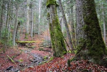 Romsilva: 15.451 de hectare impadurite si 33 de milioane de puieti plantati, in 2017