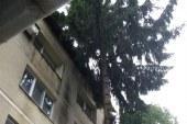 De la cititori: Cade bradul pe bloc. Primaria Baia Mare, fara reactie