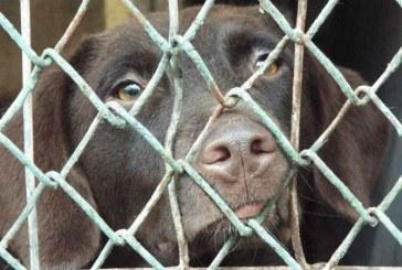Petitie – 1 milion de semnaturi in Europa impotriva cresterii animalelor in custi