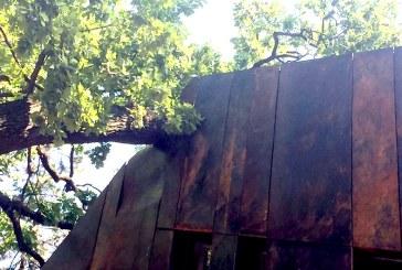 FOTO: De ce au fost taiati arborii Coloniei Pictorilor din Baia Mare