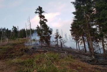 FOTO: Incendiu in padurile Borsei. Au fost afectate doua hectare