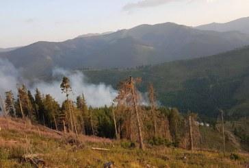 Maramures: Peste 111.300 de puieti forestieri distrusi de incendii in primele sase luni