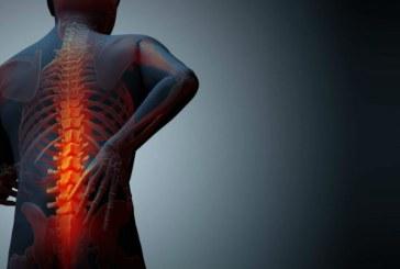 Un tratament contra osteoporozei, realizat dintr-o planta utilizata in medicina traditionala chinezeasca, are rezultate promitatoare