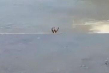 Tanar surprins facand baie in raul Sasar (VIDEO)
