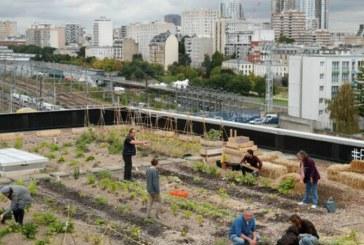 Postasii din Franta cultiva legume si cresc gaini pe acoperisul sediului Postei din Paris