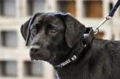 Marea Britanie – O universitate ofera studentilor posibilitatea de a plimba caini pentru a se relaxa in sesiune
