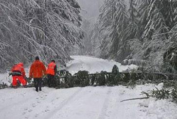 Autoritatile intervin pentru a inlatura copacii cazuti pe DJ 184