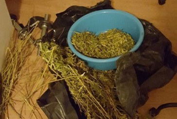 Trafic de droguri: Trei baimareni arestati pentru 30 de zile