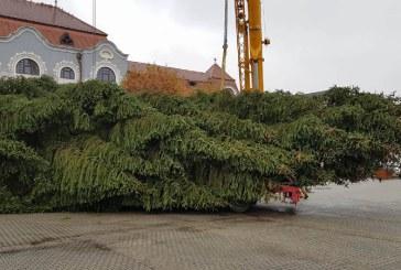 Bradul de Craciun a ajuns in Centrul Vechi din Baia Mare (FOTO&VIDEO)