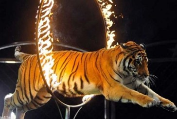 Parisul nu mai vrea animale salbatice in circuri